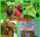 植物提取物   桑叶粉  速溶   生产厂家