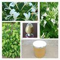 绿原酸5 -98  金银花提取物