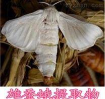 雄蠶蛾提取物   原粉