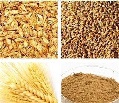汁10:1小麦胚芽提取物   现货销售  量大从优